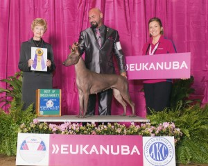 Isabella Eukanuba 2013 official