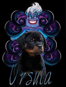 Ursula logo 2