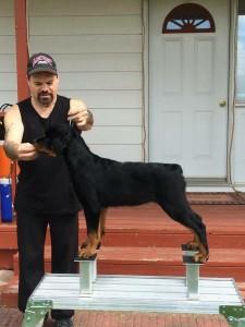 Gordon puppy a